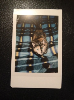 Shot taken using Instax Mini 8 w/artificial indoor light